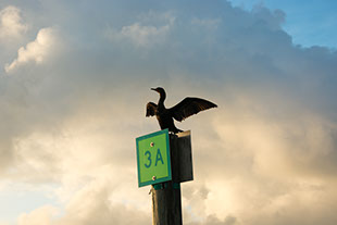 Channel Marker, Florida Keys, Ocean, Paradise, Birdwatching, nature, photography, travel guides, guidebook, anhinga